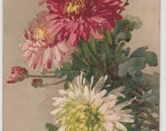 Beautiful Spray Of Chrysanthemums Flowers A/S C. Klein, Antique Postcards