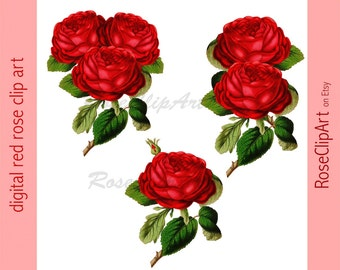 digital vintage rose clip art - 3 png files - instant download - personal and commercial use - transparent background - scrapbooking