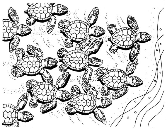 Baby Sea Turtle Coloring Pages   Photo#12
