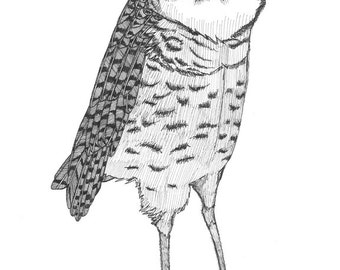 nefarious burrowing owl ORIGINAL artwork ink illustration on paper 8 x 10