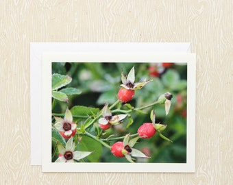 Red Rose Hips Nature Photography Note Card, blank greeting card stationery, botanical floral photo notecard