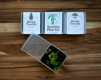Bonsai Tree 3-Pack - Grow Your Own Giant Tiny Tree! Perfect gift for gardeners & greenthumbs - SALE - Three plant kits + Seeds + Greenhouse!