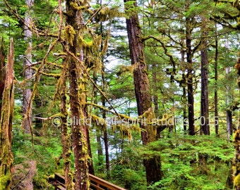 Tongass Rainforest Photo, Alaska, Landscape, Fine Art Photo
