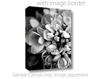 SALE Living Room Wall Art-Hydrangea Photography-Flower Photography-B&W Wall Art-Fine Art Photography-Gallery Wrap Canvas-Floral Wall Decor