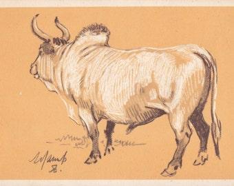 "A. Laptev ""Zebu"" Postcard -- 1956"