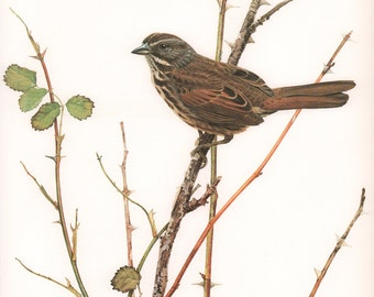 JF Lansdowne Print Book Plate Art, Song Sparrow