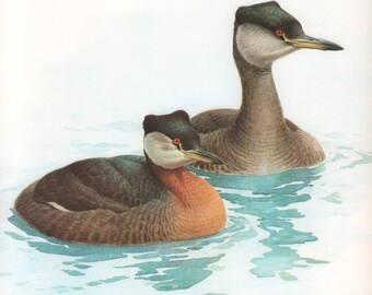 JF Lansdowne Print Book Plate Art, Red-necked Grebe