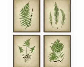 Antique Fern Botanical Art Print Set of 4 - Vintage Fern Botanical Home Decor - Antique Book Plate Illustration - Plant Biology Art (AB384)