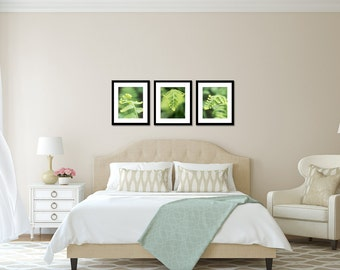 Set of Three 11x14 Prints- Fern Photography, Fern Photos, Gallery Wall Decor, Nature Photography, Leaf Photography, Affordable Wall Art