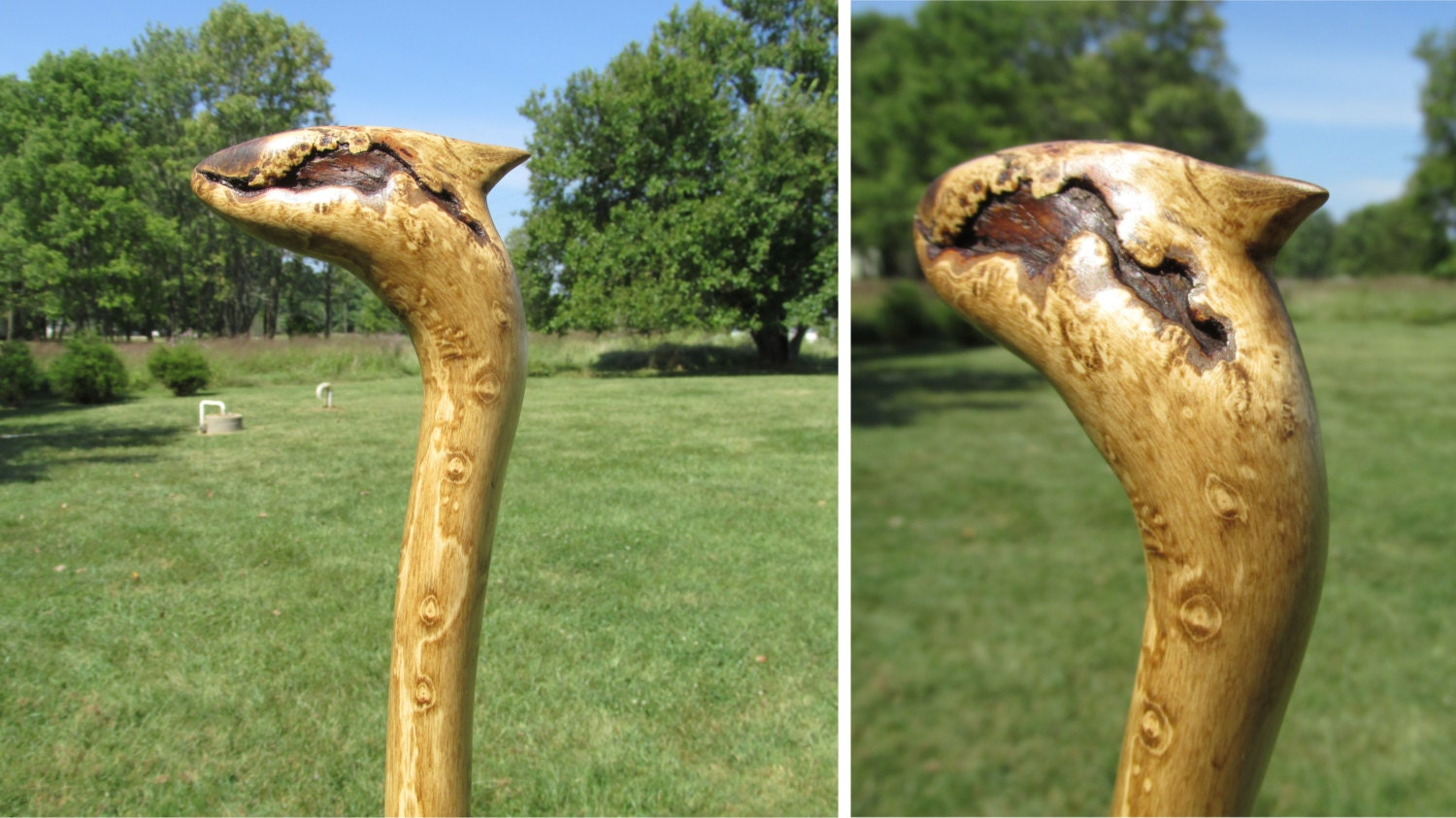 Dragon Head Staff 62 Ash Wood Light Twisted Walking