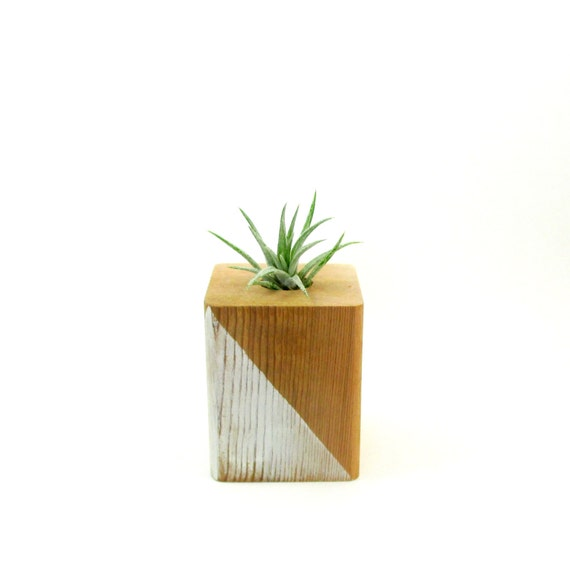 Air plant holder wood air planter tillandsia by spiritandvine for Geometric air plant holder