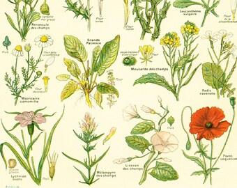 1922 Antique Botanical print of WILDFLOWERS Chart Identification French vintage illustration Larousse