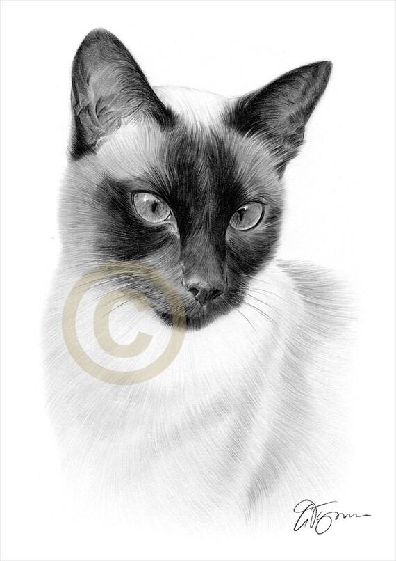 Siamese Cat Paintings Uk