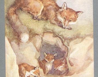 Fox Illustration By Barbara Briggs