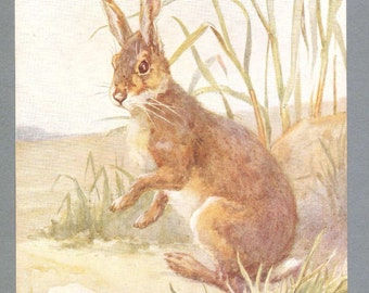 Hare Illustration By Barbara Briggs