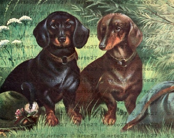 Vintage postcard with dachshunds, Dachshund for direct digital download