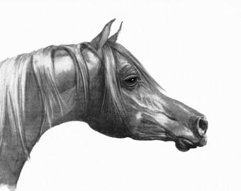 Pencil Horse Head Giclee,  Arabian Horse Drawing, Head Drawing Print, Giclee Print