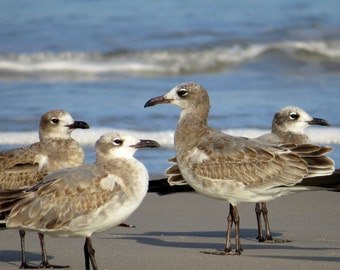Seagulls in the Wings, Ocean Photography, Beach Birds, Topsail Island Scenery, Coastal Decoration, Surf Picture Art