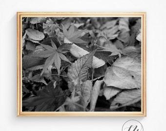 Black and White, Abstract photo, Modern wall decor, Wall decor, Wildlife photography, Photo print, Printable art, Abstract art print