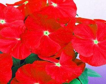 Vinca Seeds Sunsplash Red 50 Seeds
