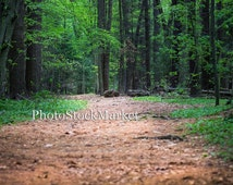 Forest Path - Photography backdrop - Photoshop - Digital download - Woodland scene - Evergreen forest - Hiking trail - Photography Backdrop