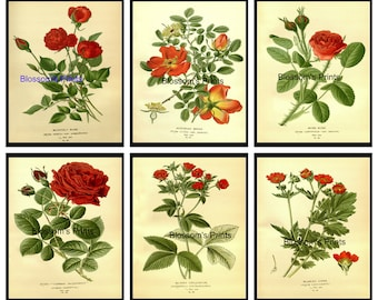 "Set of six Flowers from the 1800's. Plates 1,3,4,6,7,8.  (Prints are 8"" x 10"")"
