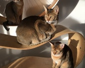 Wood Bean - shelves for cats by HolinDesign