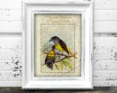 Printable bird lithograph print 13 X 10 ornithological poster Tyrannula Phoenicura and Ornata.  Aves collection.  Digital download