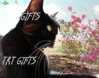 Reflective Tom *Digital Download*