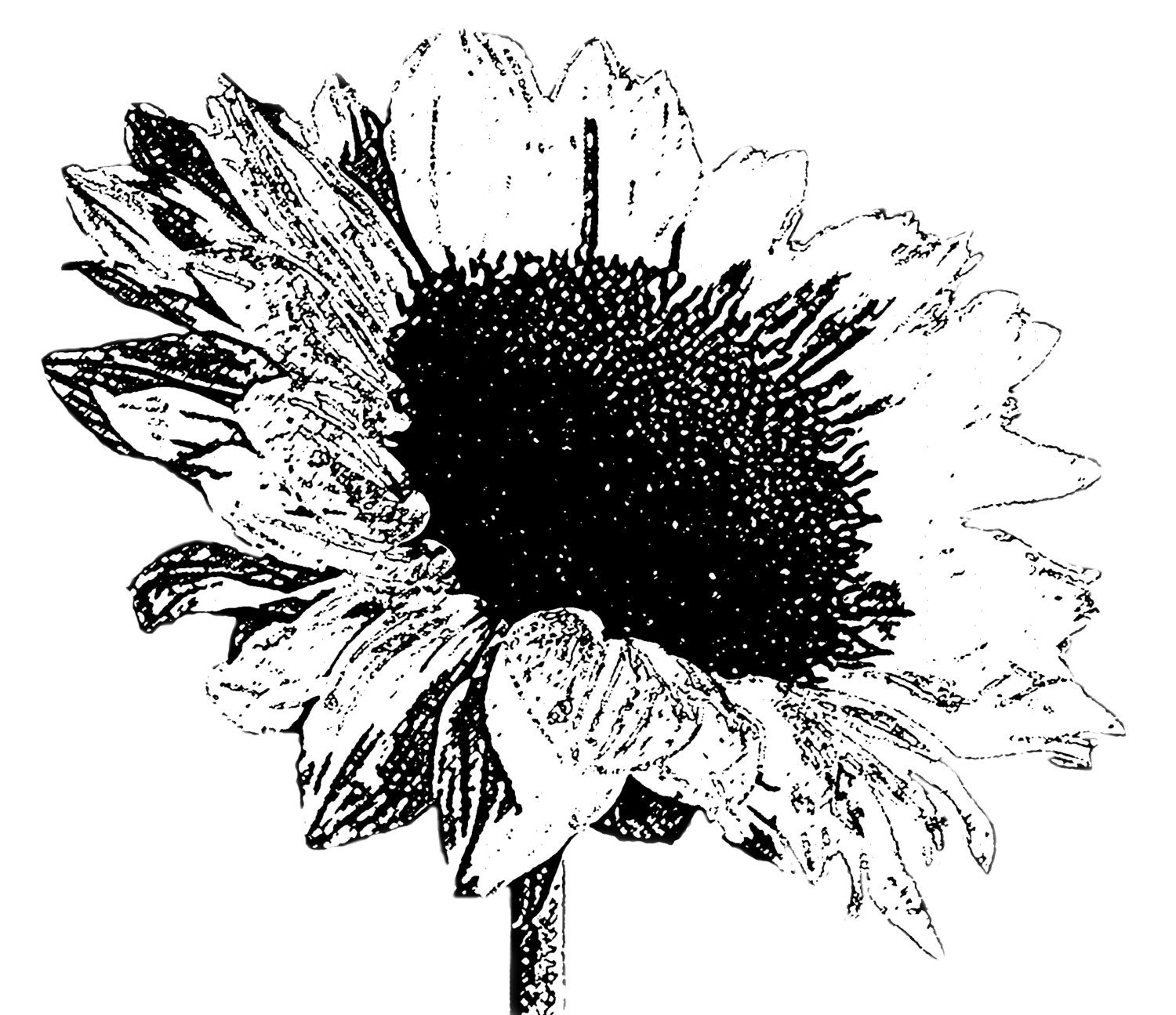 DIGITAL STAMP sunflower 03 black  for Clipart Sunflower Black And White  174mzq