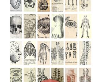 "Domino Clip Art, Vintage Anatomy, Digital Collage Sheet, Medical Illustration, Jewelry, 1""x2"", Digital Downloads, domino tiles, Jewellery"