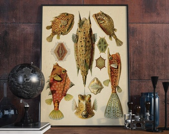 Fish Antique Print, Fish Print, Fish, Seaside Prints, Marine Wall Decor - VA007
