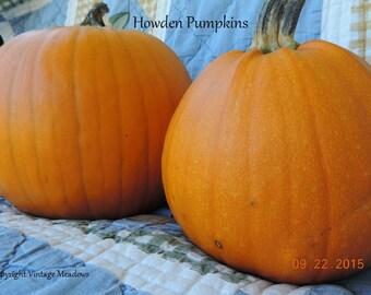 Heirloom, Organic Howden Pumpkin Seeds, Hand Harvested Fall 2015