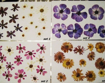 set of dried flowers for creativity, natural pressed flowers, oshibana, scrapbooking, jewelry. Set 1 3 4