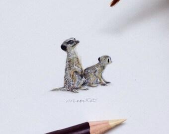 Miniature of Meerkat