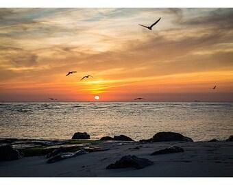 Cape May, NJ - Gulls At Sunset - 12x18 Print - Fine Art Photography
