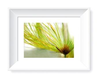 Papyruses Photography, Digital Art, Home Decor, Downloadable Art, Scrapbooking, Clip Art, Flower Photography, Flower Images