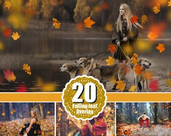 20 falling leaves Photo Overlays, Photography Overlays, Photography Photo Prop, Autumn Photoshop Overlays , png file