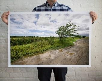 Lonesome Tree Picture, Country Scenes Photography, Country Road Scene, Exploring Nature, Explore Hawaii, Farmland Scenes, Rustic Home Decor