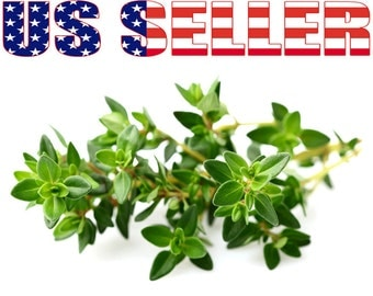 200+ ORGANIC French Thyme Seeds Herb Heirloom NON-GMO Fragrant Healthy From