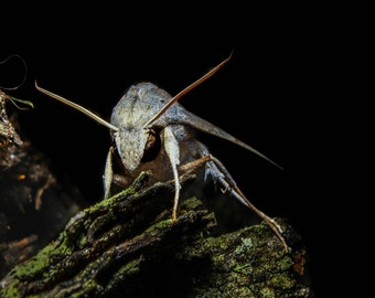 Moth macro photo