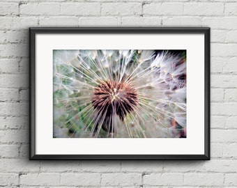 Dandelion printable print, blowball digital wall art, dandelion home decor, plant print, dandelion photography print, botanical poster print