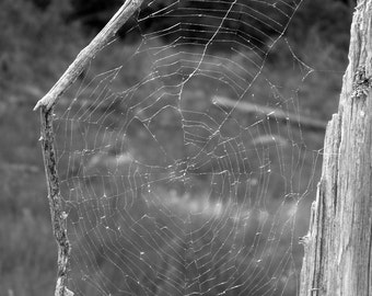 """Fine Art Photography, Spider web, fauna, insect,nature,8X12"""" or 16x24"""""""