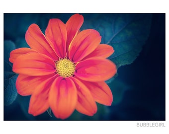Nature Photography PRINT, Orange Flower, Wall Art