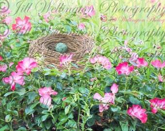 DIGITAL Fine Art Photography, photo, jpg file, instant download, Robin's Egg in Nest