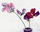 Fine Art Print of Sweet Peas in Pink and Burgundy - Watercolor Painting