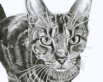Hand Drawn Custom Pet Portraits