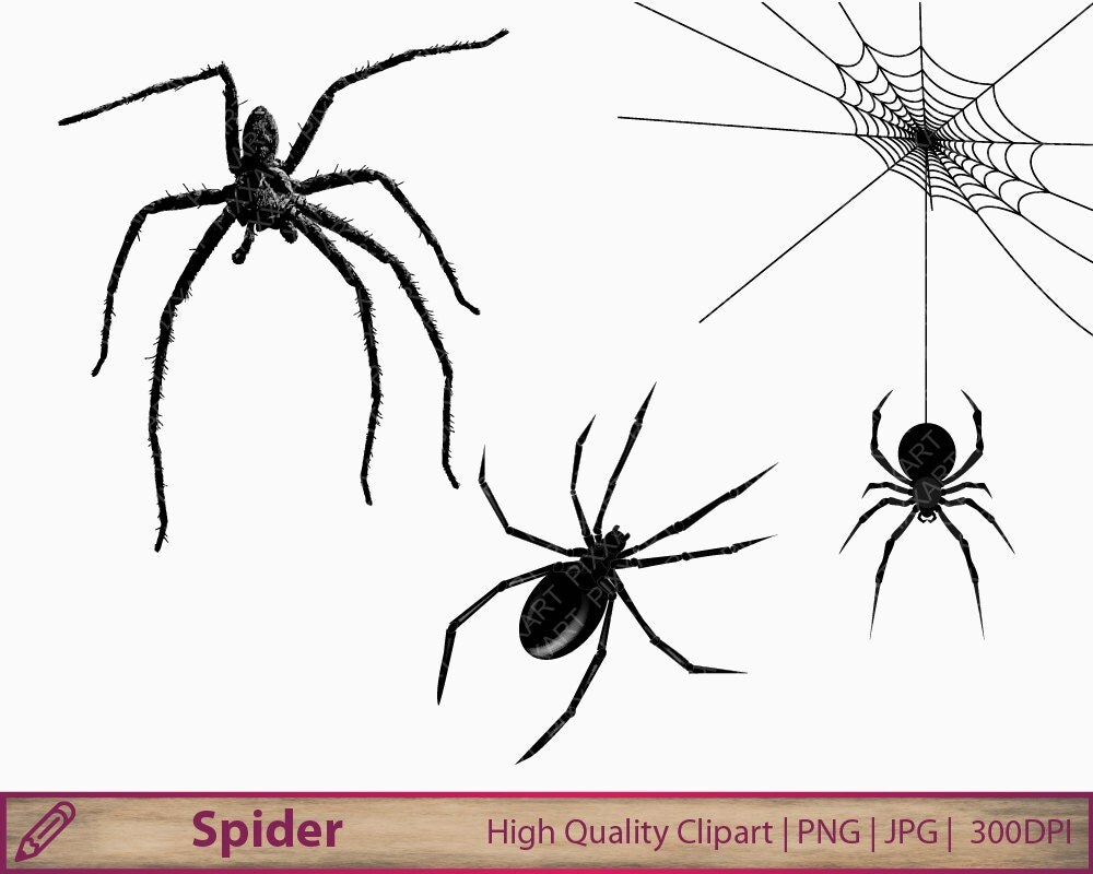 Spider clipart halloween clip art scary horror graphics