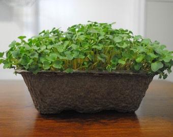 DIY Microgreens Complete Indoor Garden Gift Kit