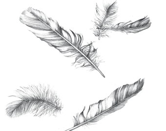 Falling Feather // Greetings Card